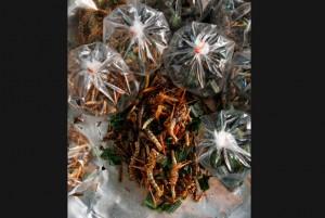 friedgrasshoppers