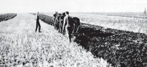 German-farmers-in-Russia-plowing-in-land-that-looks-much-lik